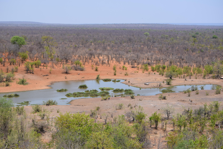 View of Water Hole from Victoria Falls Safari Lodge in Zambezi National Park Zimbabwe