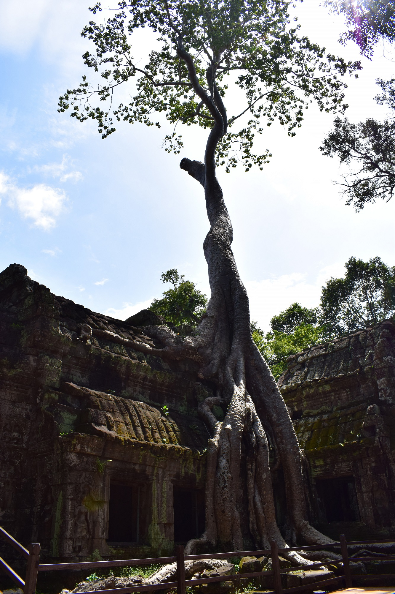 Ta Prohm Temple Tomb Raider Temple Cambodia