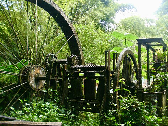 Sugarcane Plantation in Tobago