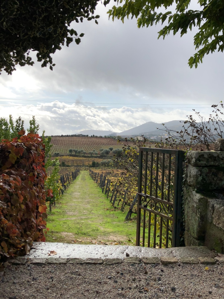 Iron Gate Leading to Vineyard in Douro Valley Portugal