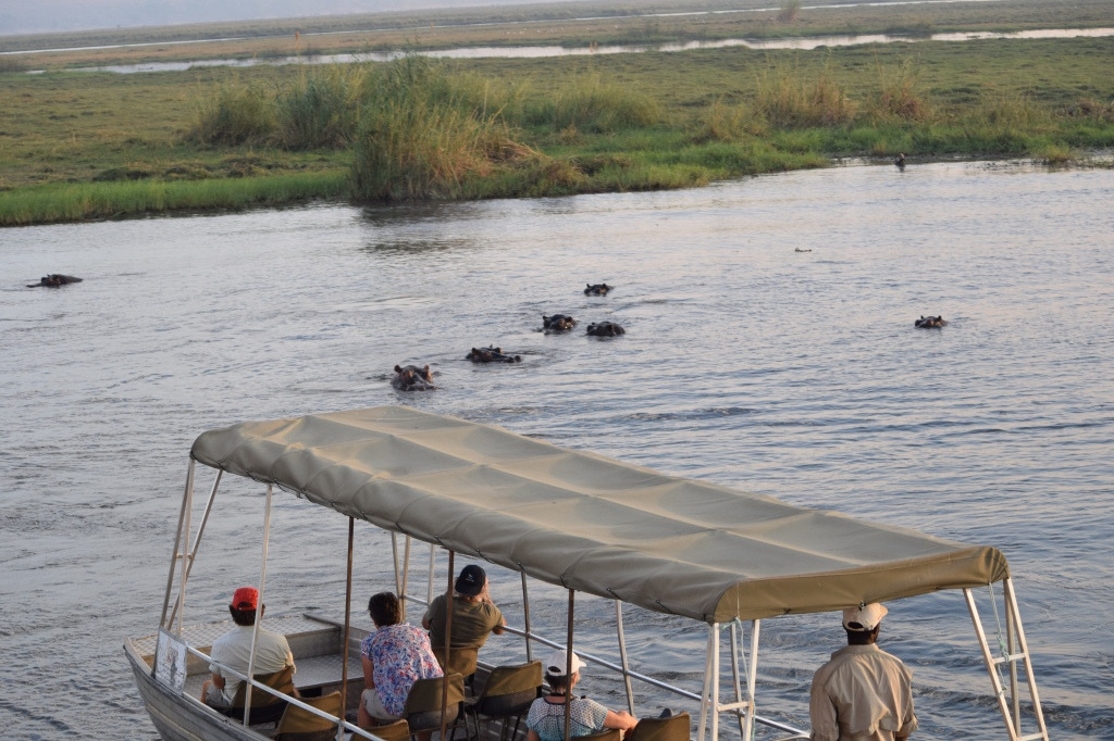 Hippos Photographed on Sunset River Cruise on Chobe River Botswana
